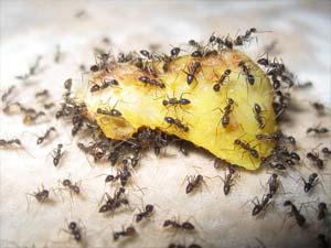 disinfestazione insetti formiche bologna e modena