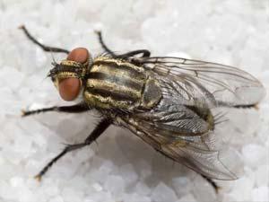 disinfestazione insetti mosche bologna e modena