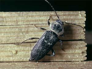 disinfestazione insetti del legno tarli