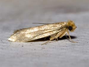 disinfestazione insetti tarme bologna e modena