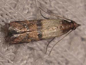 disinfestazione insetti tignole bologna e modena