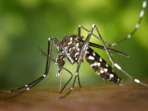 disinfestazione insetti zanzare bologna e modena